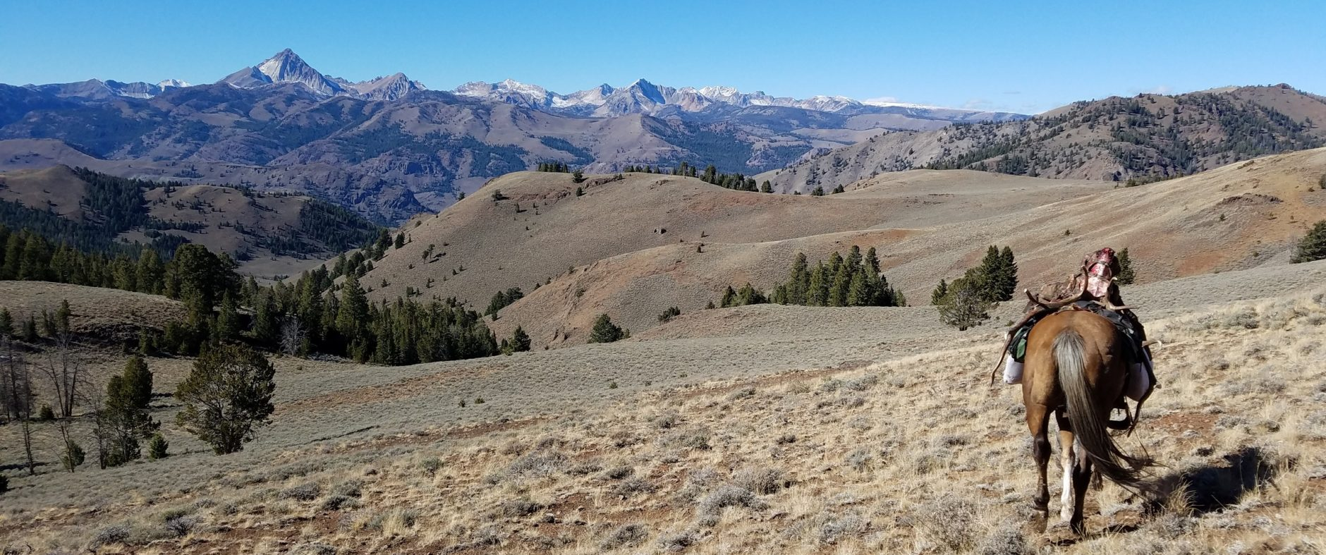 trophy elk hunt, guided rifle and archery hunts, central idaho hunting