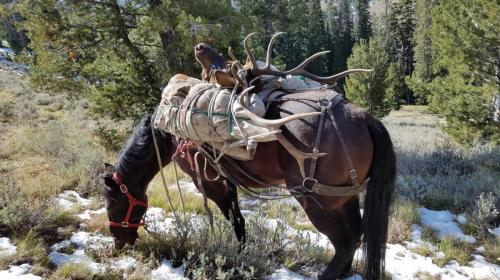 elk hunting in Idaho, Rifle elk hunt, guided elk hunt in Idaho, Idaho Hunting