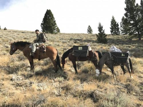 Elk Hunting on Horseback