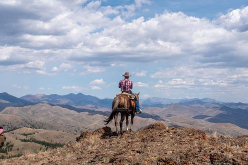 explore Idaho on the back of a gentle mountain horse