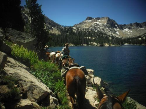 Pack Mules in Idaho